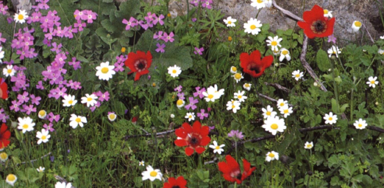 Il dettaglio dei fiori de Il Borghetto